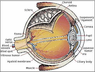 http://sagung.files.wordpress.com/2009/01/eye.jpg